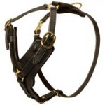 Padded Leather English Pointer Harness for Agitation Training
