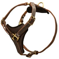 Tracking Leather English Pointer Harness With Padded Chest Plate