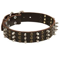 English Pointer Leather Dog Collar with Rows of Spikes and Studs