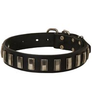 English Pointer Leather Collar with Shiny Plates