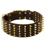 Wide Spiked Leather English Pointer Collar