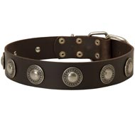 Leather English Pointer Collar Decorated with Silver Conchos