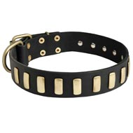 Fancy Leather English Pointer Collar with Brass Plates