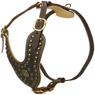Royal Design Leather English Pointer Harness with Brass Studs