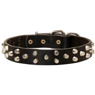 Fancy Design Leather English Pointer Collar with Nickel Pyramids