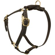 Y-Shaped Leather English Pointer Harness for Tracking and Training