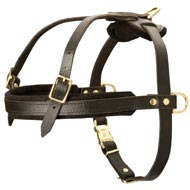 Leather English Pointer Harness for Tracking and Pulling