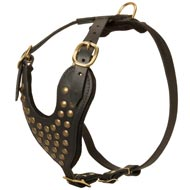 Adjustable Studded Leather English Pointer Harness for Fashion Walking