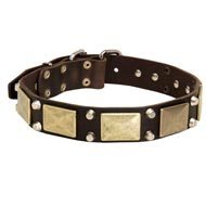 Leather English Pointer Collar with Studs and Plates