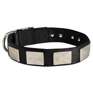Nylon English Pointer Collar Massive Nickel Plates