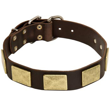 Leather English Pointer Collar with Fashionable Studs