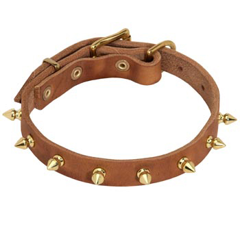 Designer Leather Collar for English Pointer