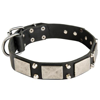Studded Leather English Pointer Collar