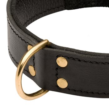 Brass D-ring Stitched to Leather English Pointer Collar