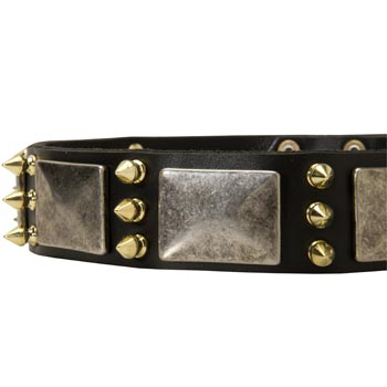 Stylish Leather Dog Collar for English Pointer