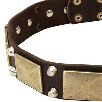 Leather English Pointer Collar with Nickel Studs