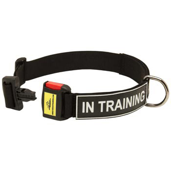 Nylon Dog Collar for English Pointer Police Training