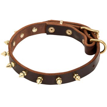 Leather English Pointer Collar with Brass Spikes