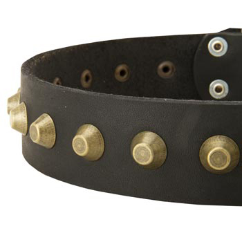 Leather Dog Collar with Brass Pyramids for English Pointer
