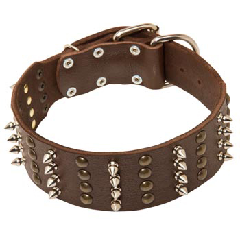 Leather Collar for English Pointer Walking in Style