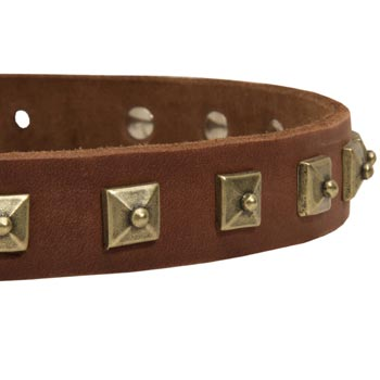 English Pointer Leather Collar With Square  Studs