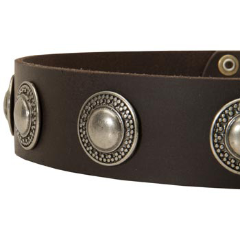 Leather Dog Collar with Conchos for   English Pointer