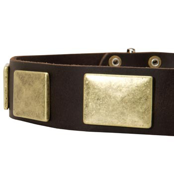 Leather Dog Collar with Massive Brass Plates for English Pointer