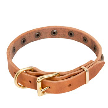 English Pointer Leather Collar with Studs