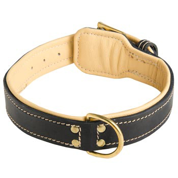 Leather Dog Collar Padded for English Pointer Off Leash Training