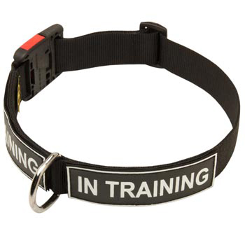 Nylon English Pointer Collar With ID Patches