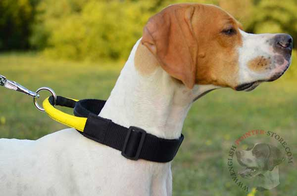 Nylon English Pointer Collar