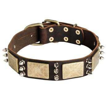 War-Style Leather Dog Collar for English Pointer