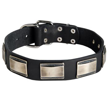 Leather English Pointer Collar with Solid Nickel Plates