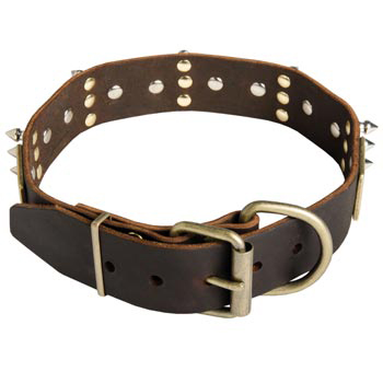 Spiked Leather English Pointer Collar