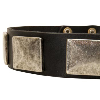 Wide Leather English Pointer Collar for Walking