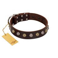 """Gape Buster"" FDT Artisan Brown Leather English Pointer Collar with One Row of Studs"