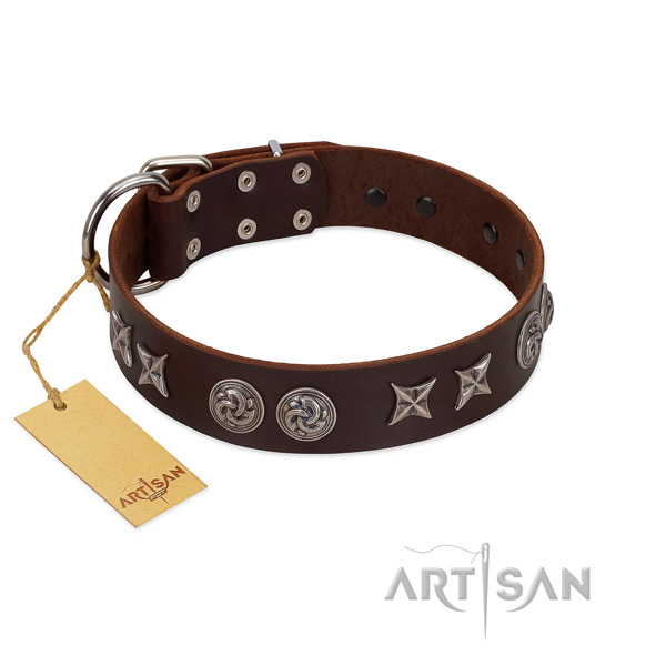 Daily use dog collar of leather with inimitable adornments