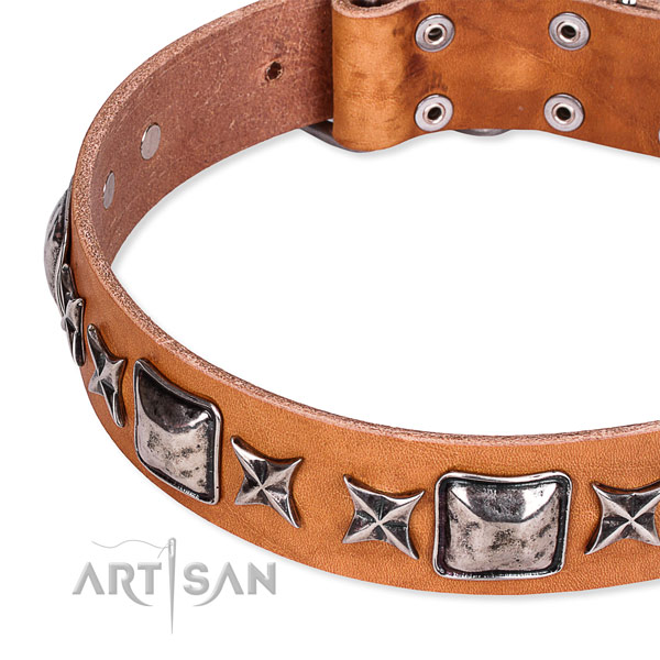 Handy use studded dog collar of quality full grain leather