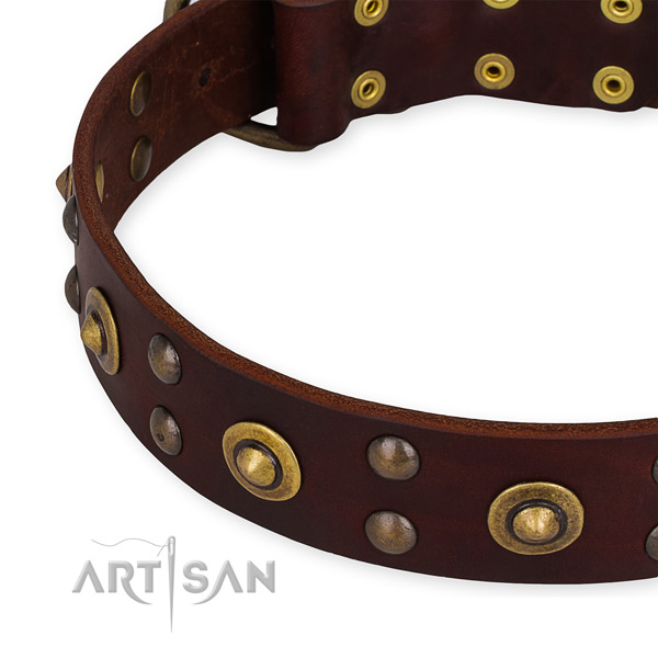 Full grain leather collar with reliable hardware for your handsome four-legged friend