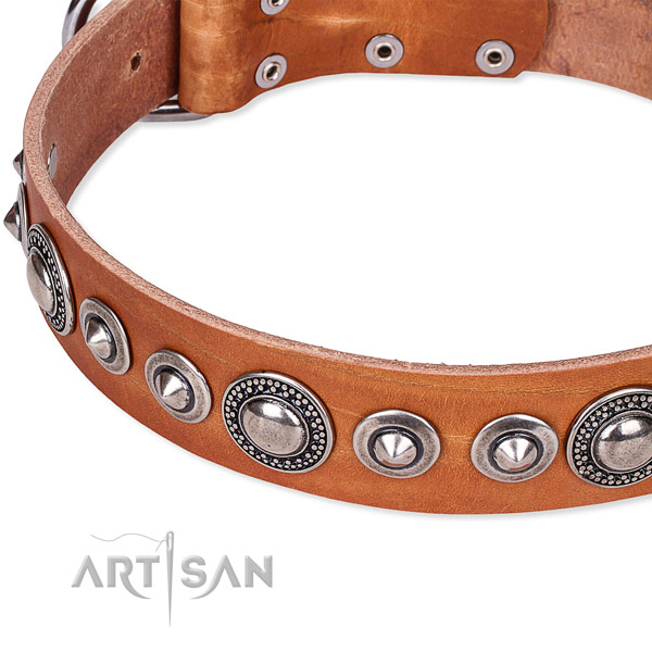Stylish walking adorned dog collar of durable full grain leather