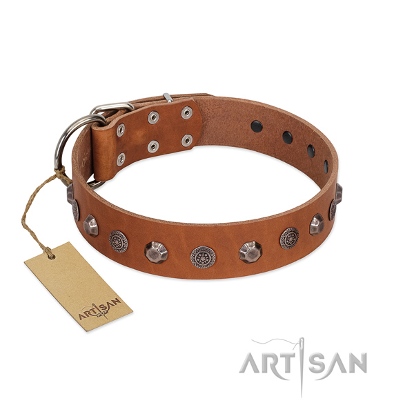 Strong buckle on genuine leather dog collar for everyday walking your dog