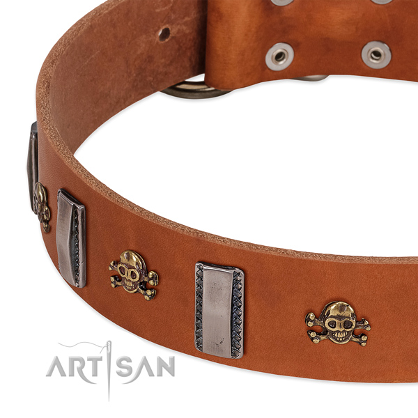 Inimitable studs on genuine leather dog collar for walking