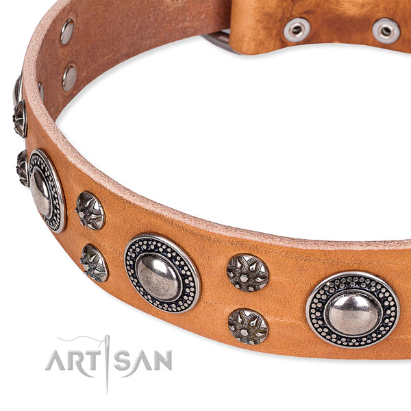 Daily use embellished dog collar of top notch full grain leather