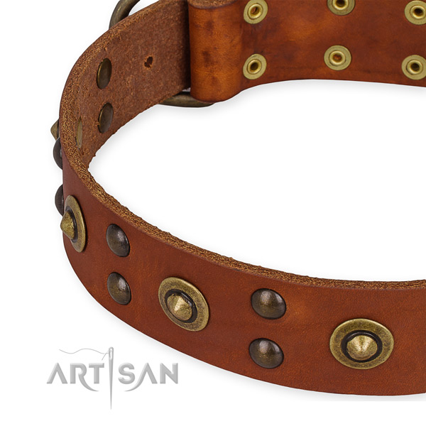 Leather collar with rust resistant traditional buckle for your attractive dog