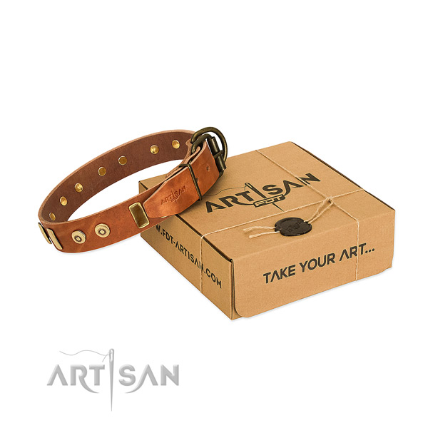 Full grain leather dog collar with stylish design studs for walking