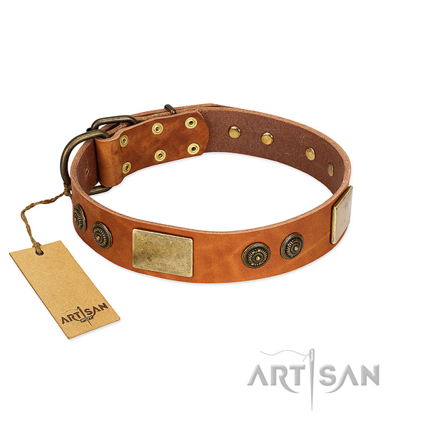 Awesome leather dog collar for fancy walking