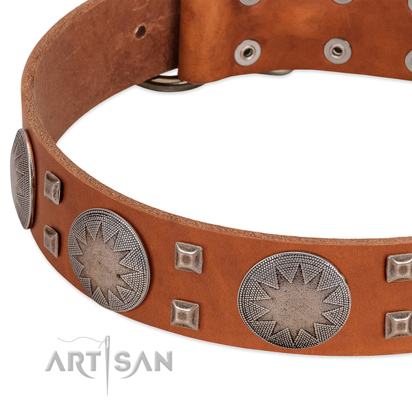 Everyday use best quality leather dog collar with embellishments