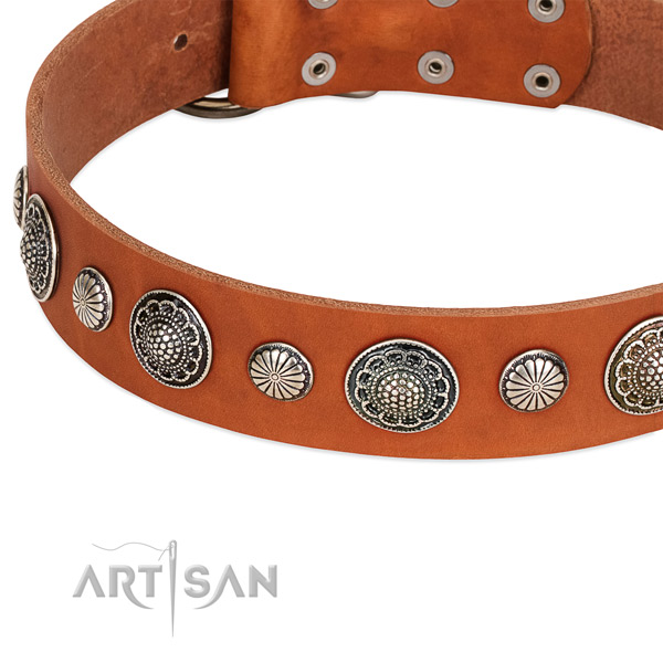 Leather collar with reliable buckle for your attractive pet