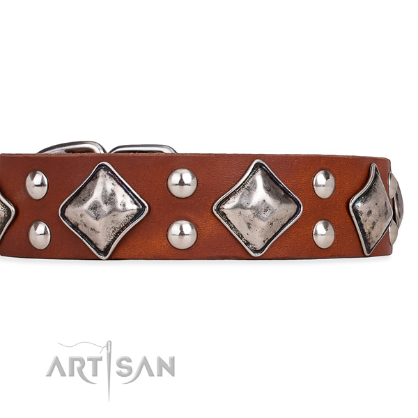 Full grain leather dog collar with remarkable corrosion proof decorations