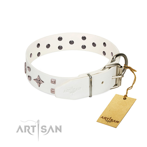 Full grain leather dog collar with extraordinary studs